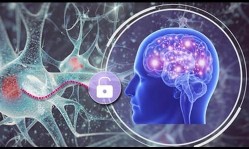 Brain password