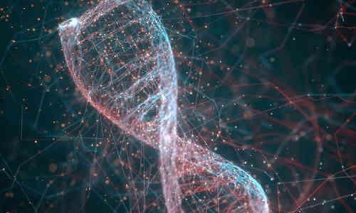 A DNA molecule.