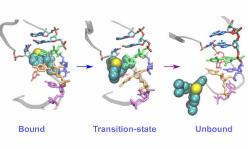Structural changes in RNA on drug binding/unbinding.