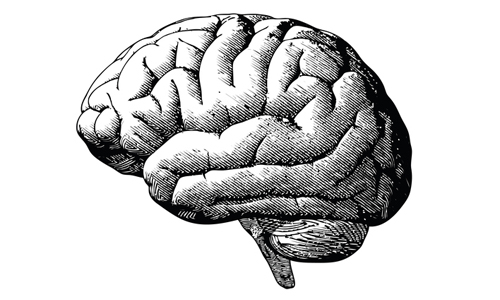 Engraving brain illustration in grayscale