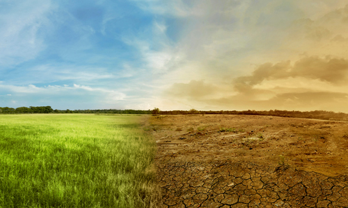 Panoramic photo of a grass field that turns into a desert