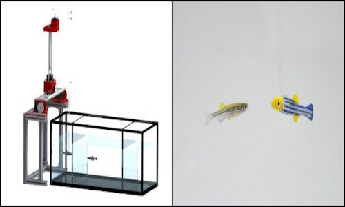 The control system featuring a robot interacting in with live zebrafish.