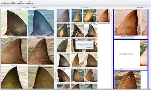 organized image database