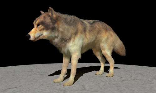 A rendering of a wolf generated with the researchers from UC San Diego and UC Berkeley's method.
