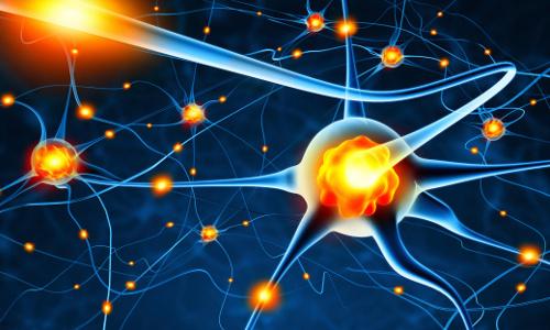An illustration of nerve cells.