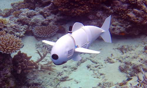 MIT's Soft Robotic Fish swimming in water