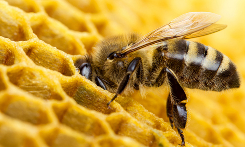 A bee in a honeycomb