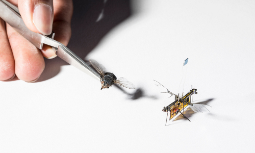 fly and RoboFly