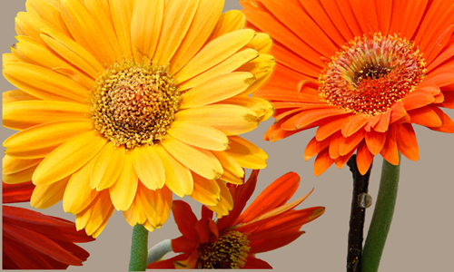Photo of yellow and orange flowers