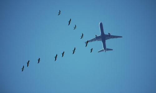 Seagulls flying in front of a passenger plane