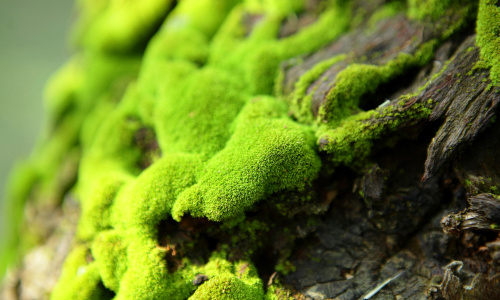 Close up of moss growing on tree bark