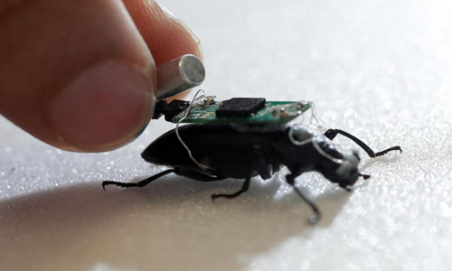 Darkling beetle with tiny computer strapped to its back