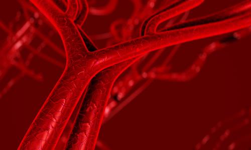 3d rendering of artery