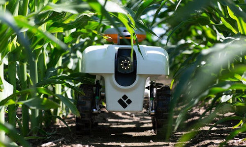 The TerraSentia robot can navigate under dense crop canopies.