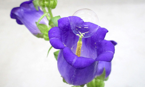 Researchers in Japan developed a drone equipped with a bubble maker for autonomous pollination.