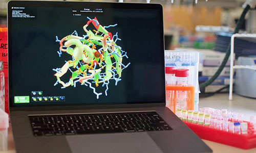 A Foldit computer design of a protein molecule displayed on a laptop